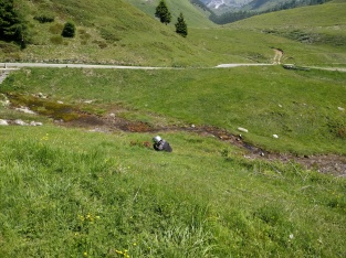 Steph taking wildflower pictures on Vivione Pass